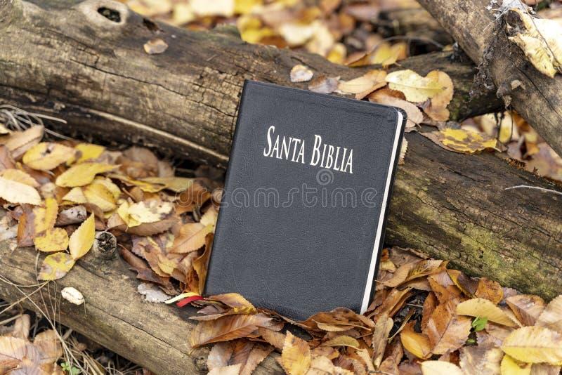 A Bíblia Sagrada A Bíblia fechado que descansa em um tronco de árvore, sobre as folhas de outono caídas imagens de stock