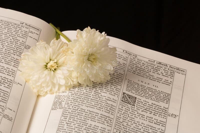 A Bíblia (vista 4) foto de stock