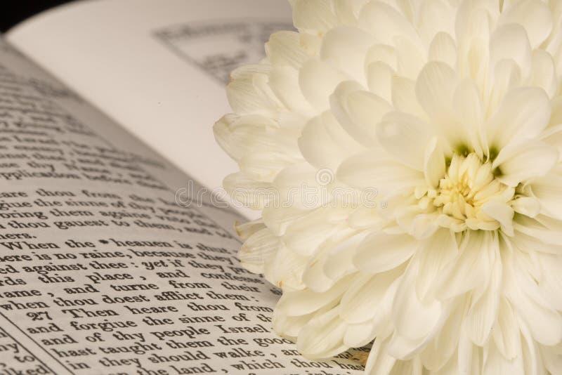A Bíblia (vista 6) foto de stock