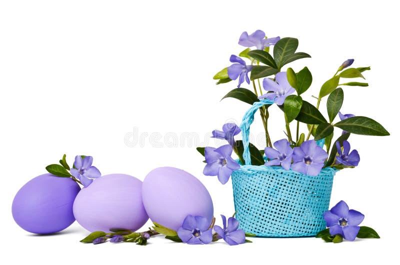 Bígaro azul hermoso en los huevos de Pascua de la cesta y de la violeta imagen de archivo