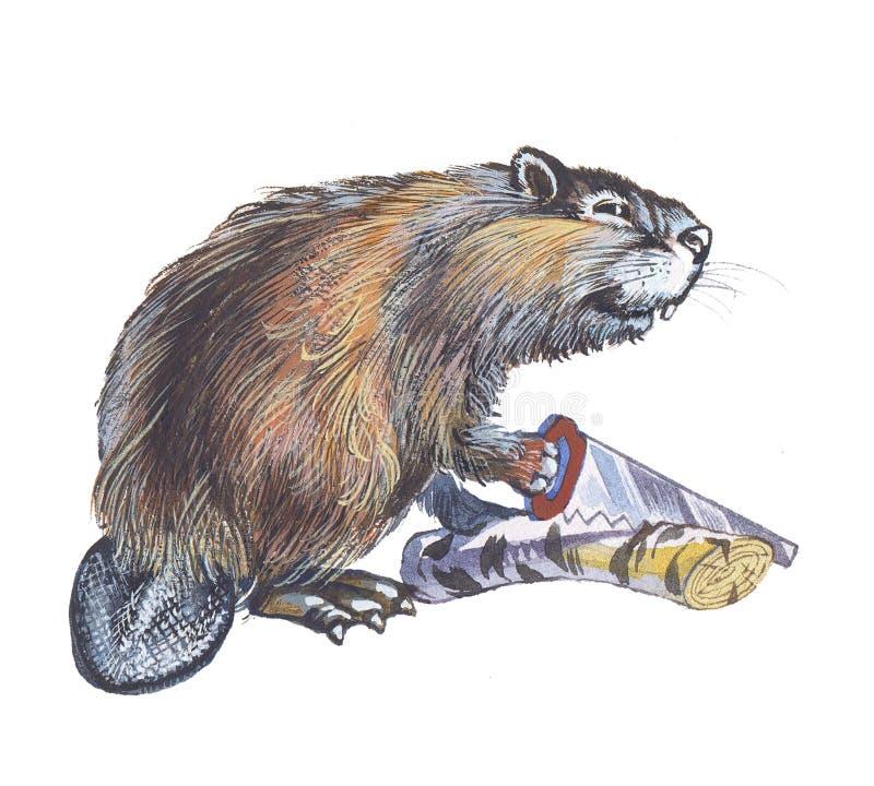 bóbr royalty ilustracja