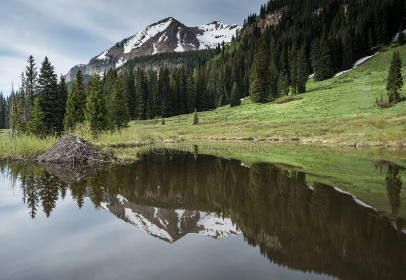 Bóbr domowa wysokość w Kolorado Skalistych górach w lecie fotografia royalty free