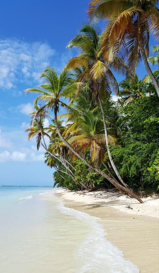 Böjande palmträd längs kustlinjen royaltyfria bilder