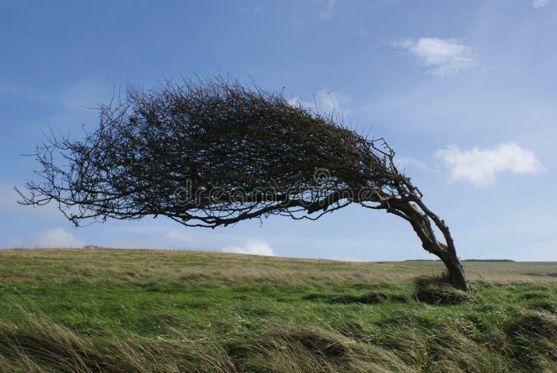 Böjt träd arkivfoton