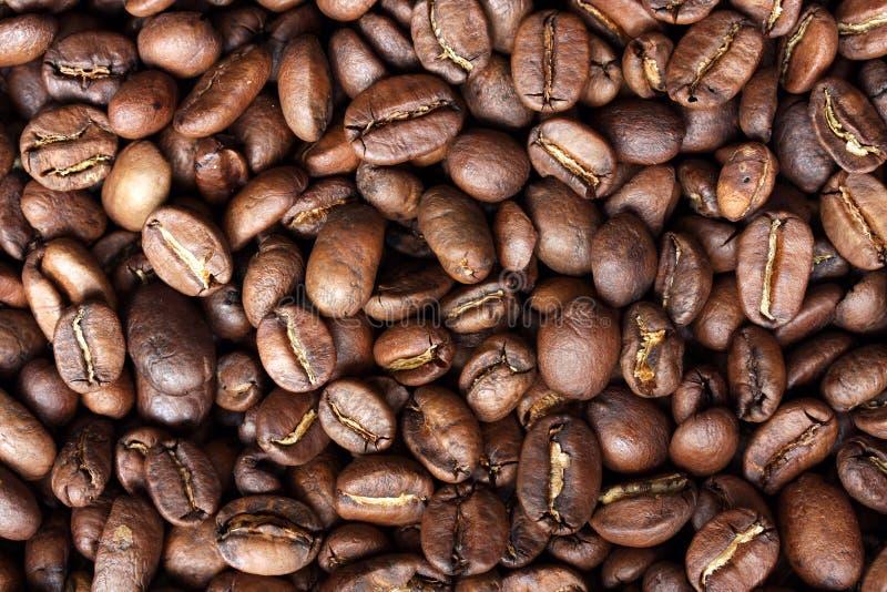 bönacloseupkaffe arkivbild