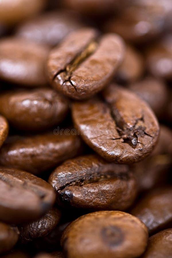 bönacloseupkaffe royaltyfri bild