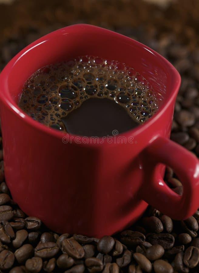bönakaffesnut fotografering för bildbyråer