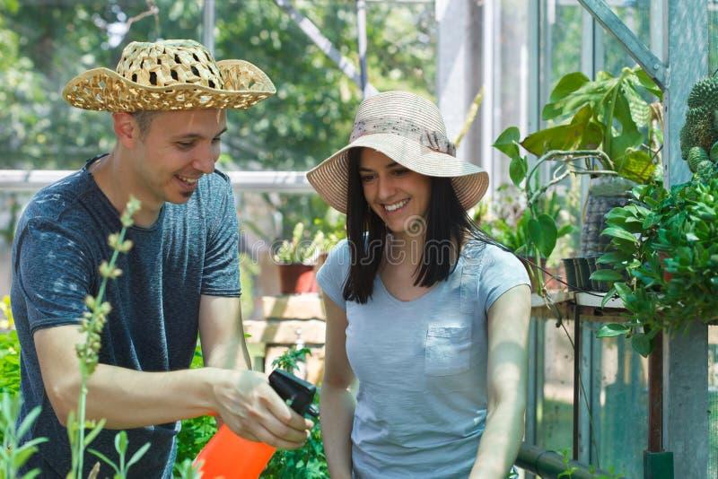 Bönder för ung man som och kvinnaväxer organiska grönsaker i ett växthus arkivfoto