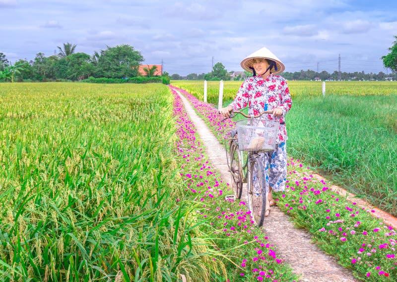 Bönder leder cyklar för att besöka risfälten royaltyfri bild