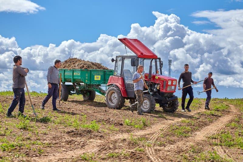 Bönder med högafflar står den near traktoren på solig sommardag royaltyfri fotografi