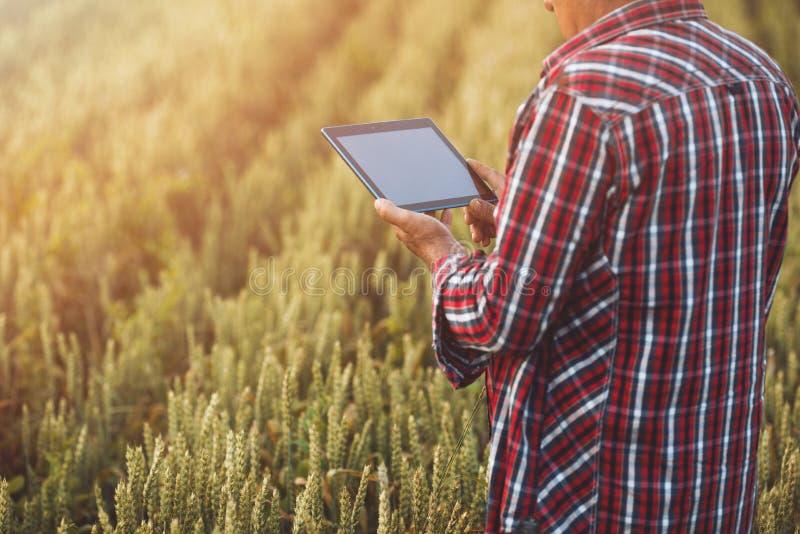 Bönder med minnestavlan i ett vetefält Smart lantbruk fotografering för bildbyråer