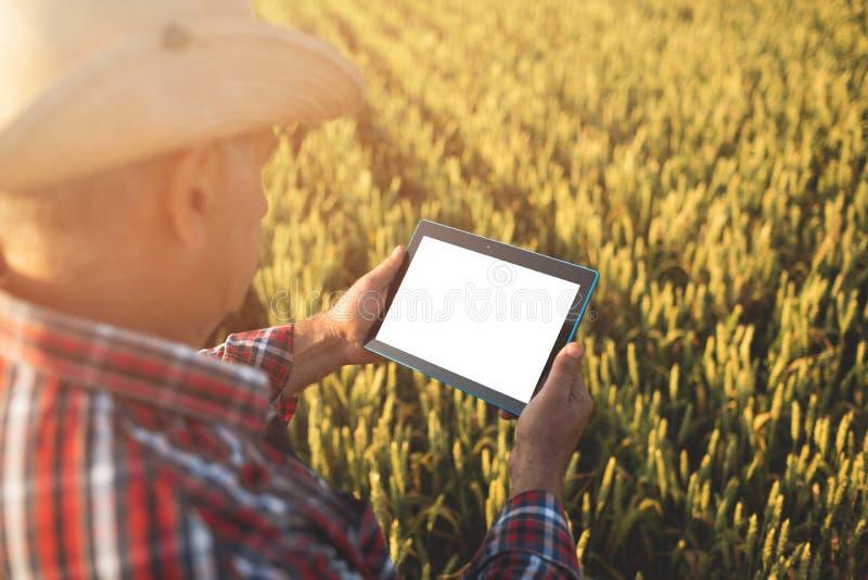 Bönder med minnestavlan i ett vetefält Smart lantbruk royaltyfri fotografi