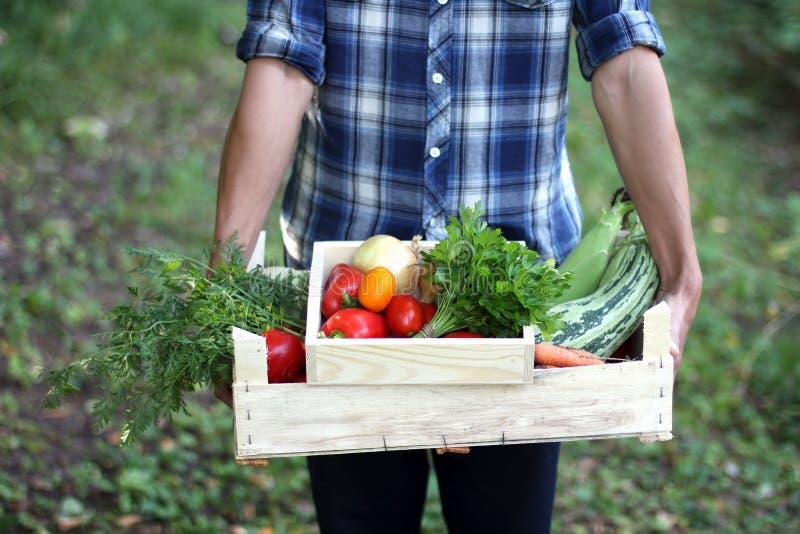 Bönder räcker med två träaskar med nya grönsaker Bondeplockninggrönsaker arkivbilder