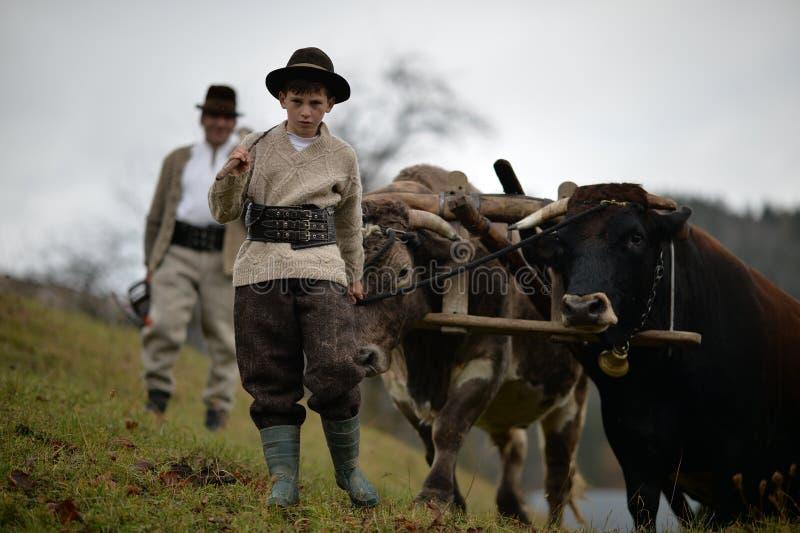 Bönder som vägleder hans oxar royaltyfri foto