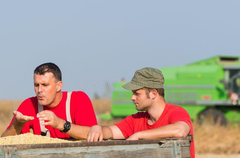 Bönder undersöker sojabönan i släp efter skörd royaltyfri bild