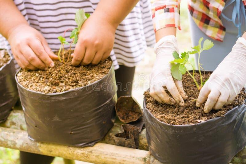 Bönder utvidgar Veggies och fruktväxten arkivfoton
