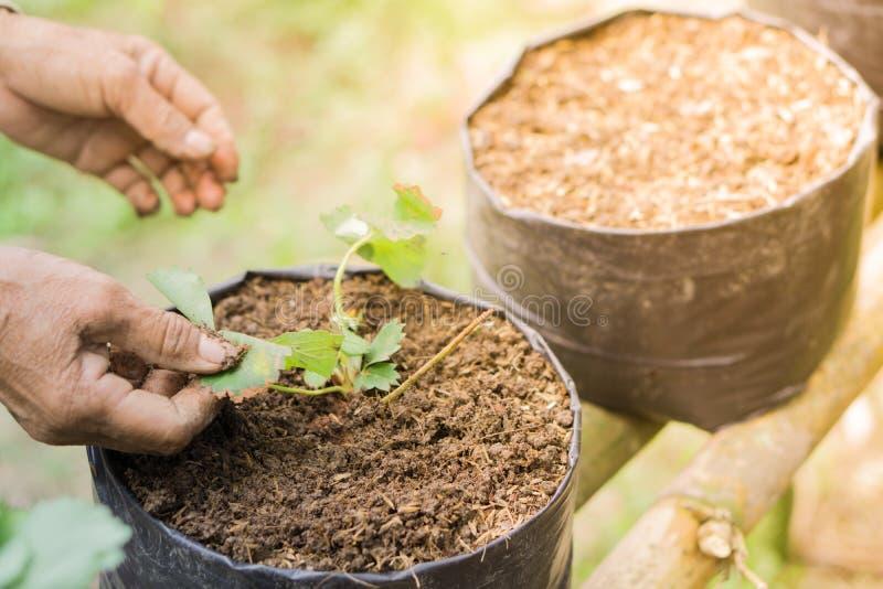Bönder utvidgar Veggies och fruktväxten fotografering för bildbyråer