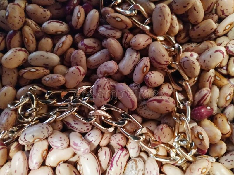 Bönor med den guld- kedjan i solig dag arkivbild