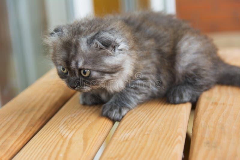 Bördiga kattungar ett privat hem arkivfoton