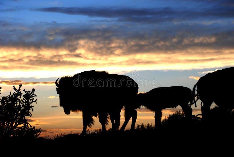 Búfalo Bison Silhouette en Ridge en la puesta del sol foto de archivo libre de regalías