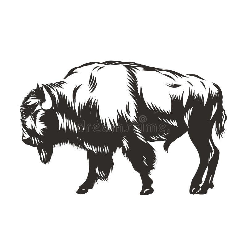 Búfalo - bisonte americano stock de ilustración
