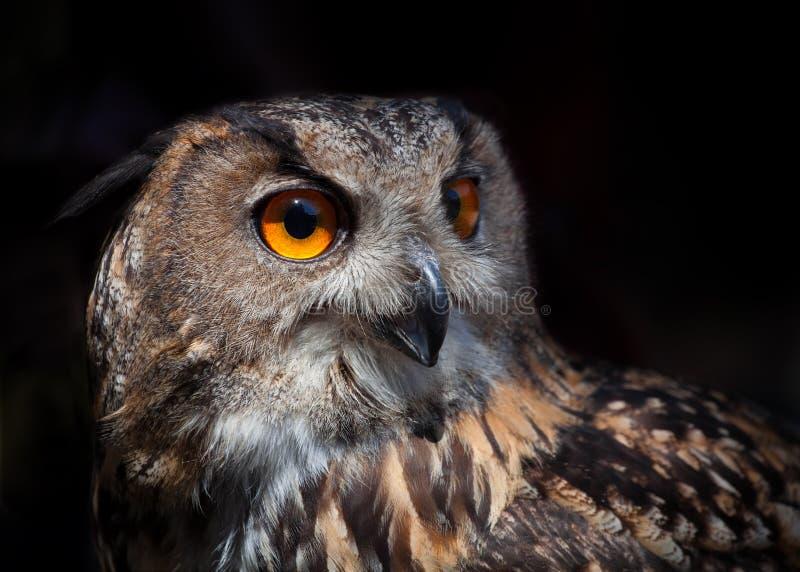 Búho de águila eurasiático con el pico abierto imágenes de archivo libres de regalías