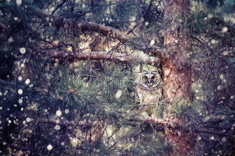 Búho espigado largo en el bosque fotos de archivo libres de regalías