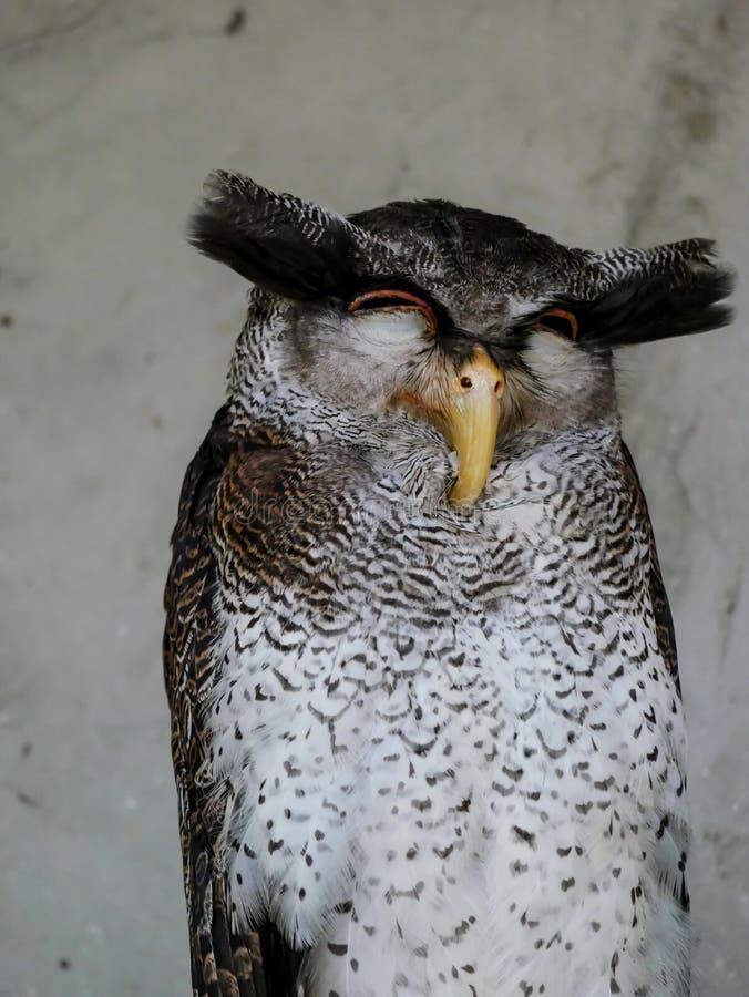 Búho, Kuala Lumpur Bird Park imágenes de archivo libres de regalías