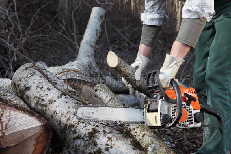 Bûcheron à l'aide de la tronçonneuse coupant le grand arbre pendant les clo d'automne photographie stock