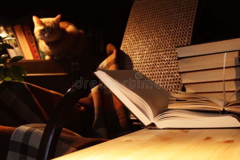 Bücher und Katze stockfoto