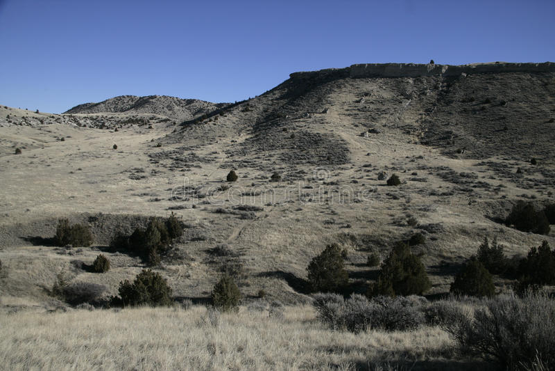 Büffel springen Nationalpark stockfotografie