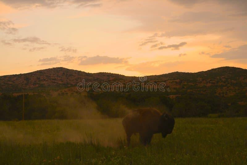 Büffel wischen weg ab stockfoto