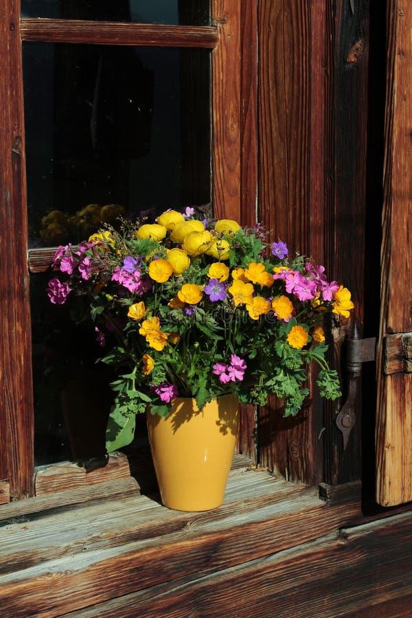 Bündel alpine Wildflowers lizenzfreie stockfotos