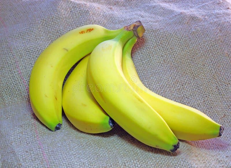 Bündel Bananen. stockbild