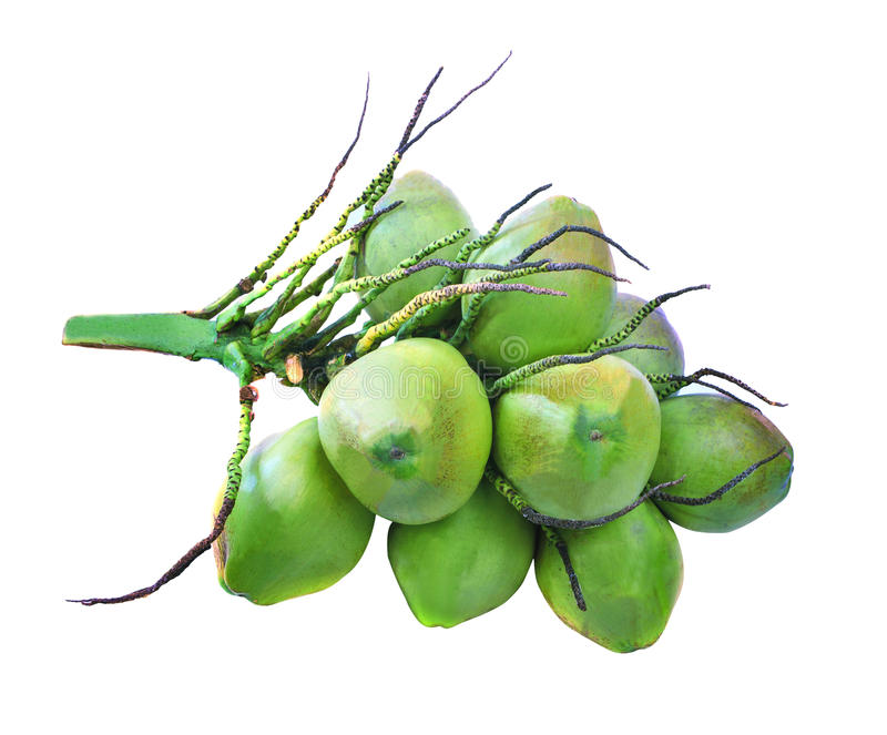 Bündel der grünen Kokosnussgruppe lokalisierte weißen Hintergrund lizenzfreie stockbilder