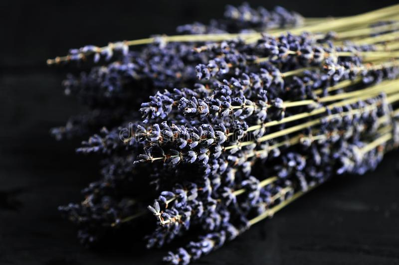 Bündel der Lavendelnahaufnahme lizenzfreies stockfoto