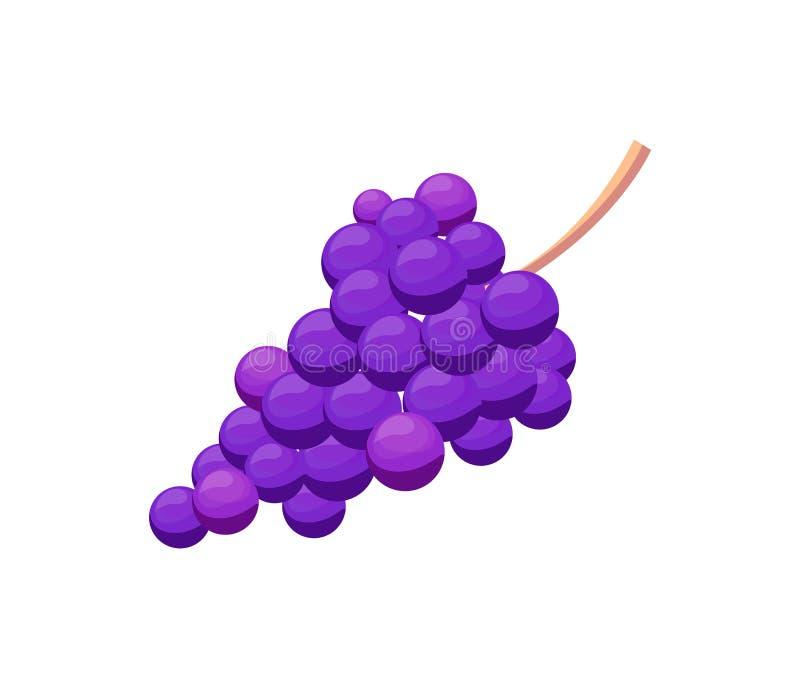 Bündel der purpurroten Trauben-Vektor-Illustration lokalisiert lizenzfreie abbildung