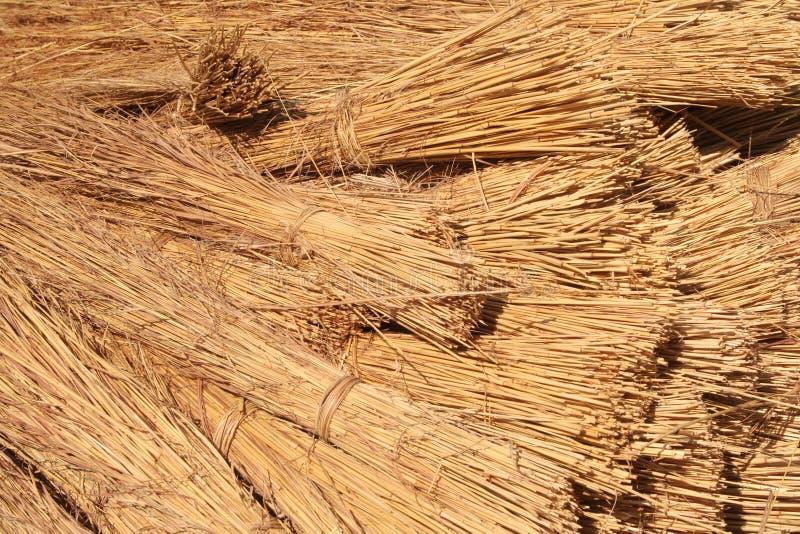 Bündel des Dachs Thatching Gras lizenzfreie stockfotos
