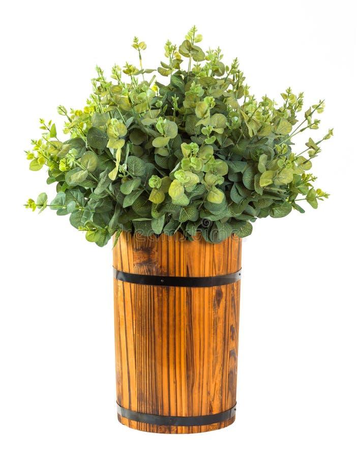 Bündel des Eukalyptusblattes stockbild