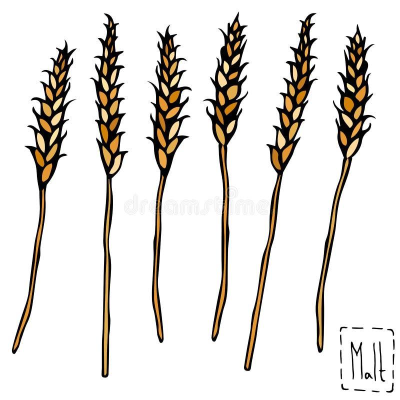 Bündel des Malz-Gekritzels Sketsh Reife Ohren des Malzes, Gerste, Weizen, Rye Bierkneipe-Vektor-Illustration stock abbildung