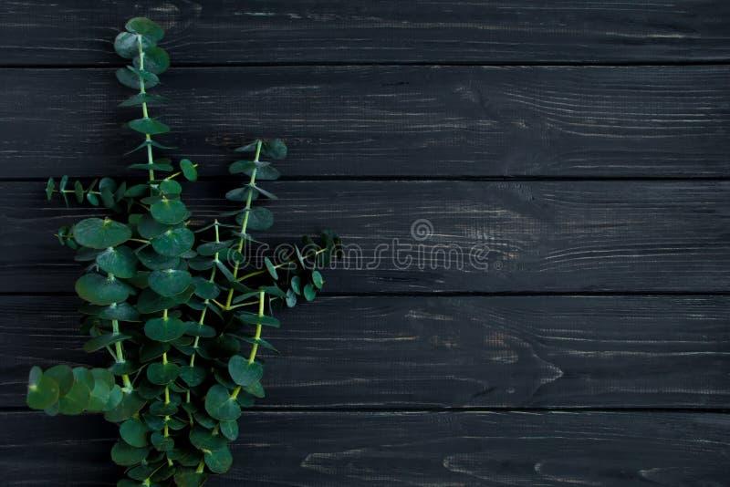 Bündel Eukalyptusniederlassungen auf schwarzem Hintergrund Minimalistic Frühlingszusammensetzung der Natur, Draufsicht, flache La stockfoto