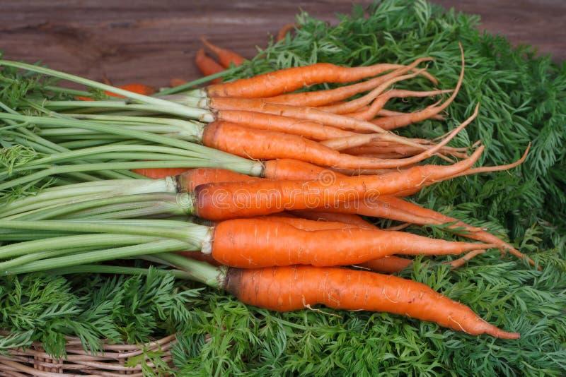 Bündel frische Karotten mit Grün verlässt über hölzernem Hintergrund lizenzfreie stockfotografie