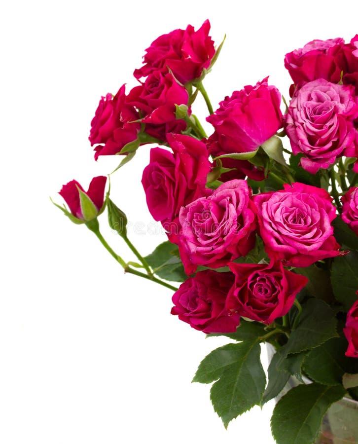 Bündel frische malvenfarbene Rosen stockbilder