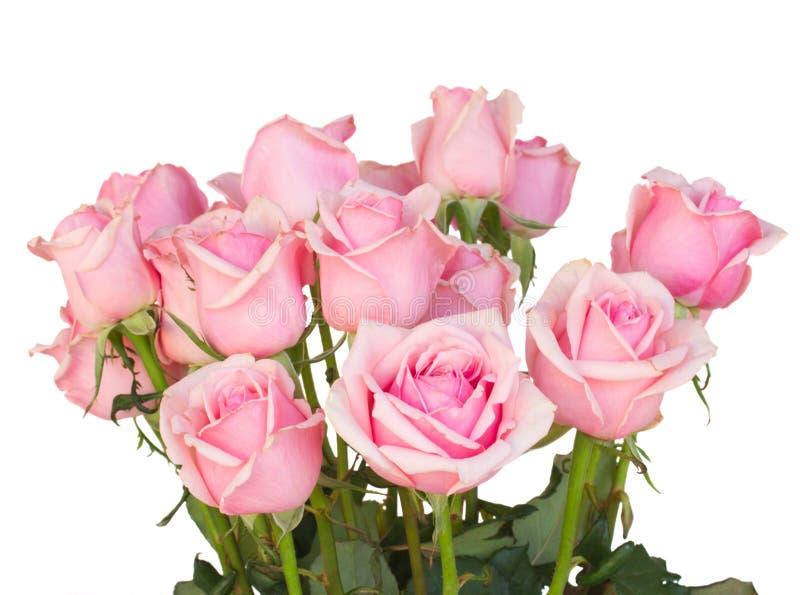 Bündel frische rosa Rosen stockbild