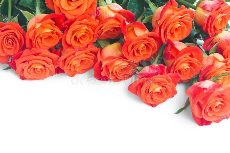 Bündel frische Rosen lizenzfreies stockbild