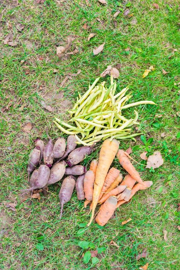 Bündel frisches organisches Gemüse, das auf dem Gras liegt stockbild