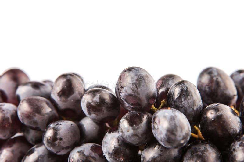 Bündel Frucht VII der blauen Trauben lizenzfreie stockfotografie