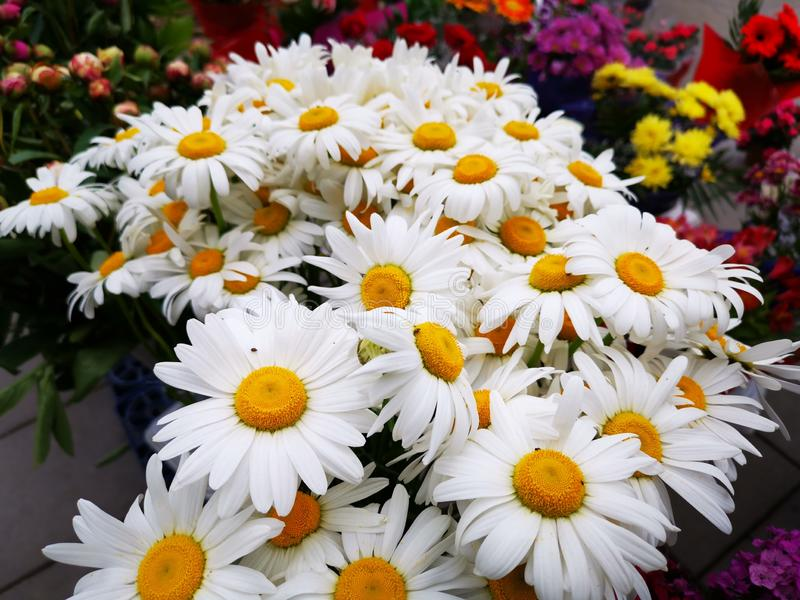 Bündel Gänseblümchen zusammen mit anderen Blumen lizenzfreies stockbild