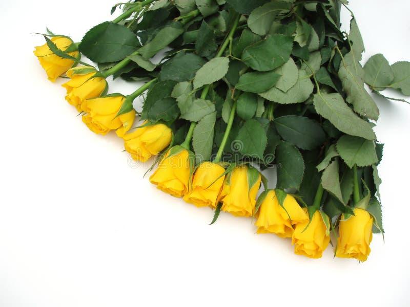 Bündel gelbe Rosen stockfoto