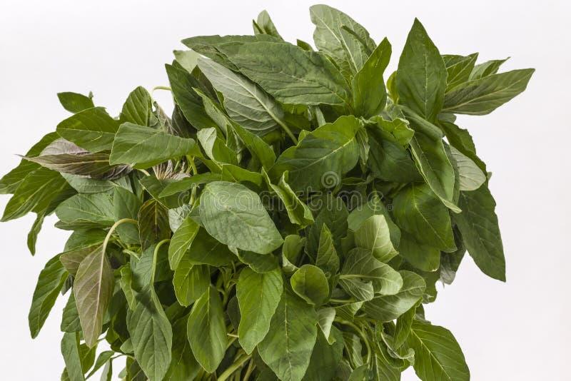 Bündel grüne Amarantblätter stockfotos